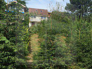 stupava-rekreacia-predaj-rezervovane-na-predaj-zahradka-s-murovanou-chatkou-v-krasnom-tichom-prostredi-v-stupave-pozor-znizena-cena-40959
